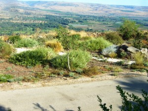 גינון בהשראת הטבע ( ארץ ישראלי)